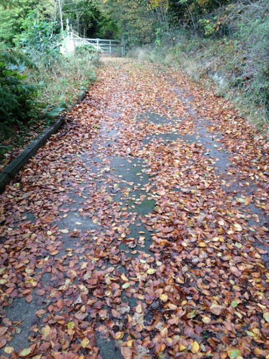 Pathway covered in brown autumn leaves