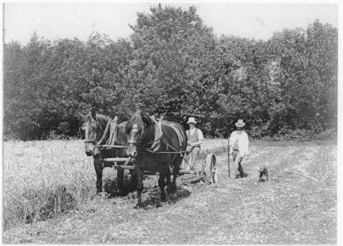 A historical photo of two men and two horses ploughing a field