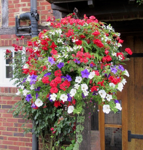 Beautiful floral hanging basket