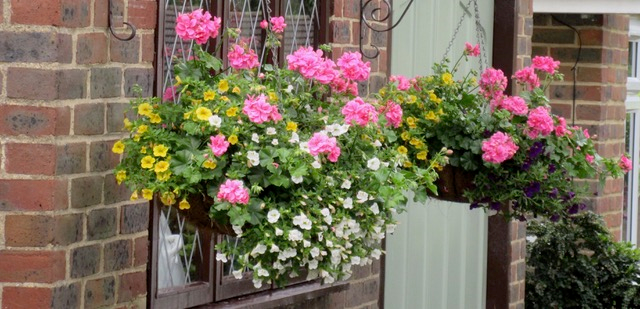 Hanging basket with colourful flowers