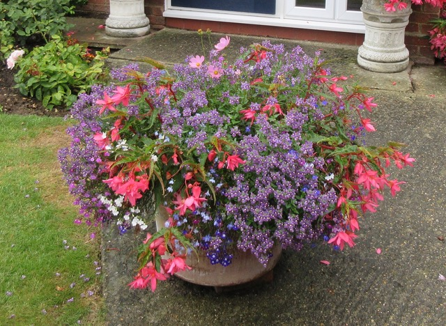Pretty flowers in pots