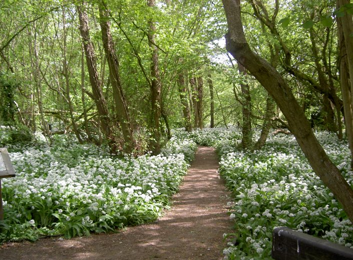 A lovely floral walk in the woods