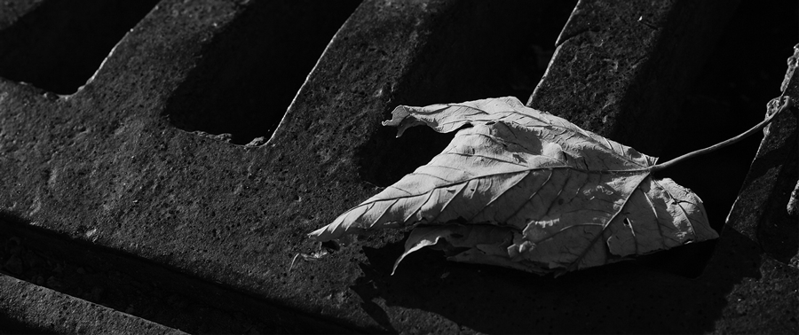 a close-up of a drain with a leaf across it.
