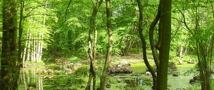 Spring time in the woods, on a sunny day by the pond