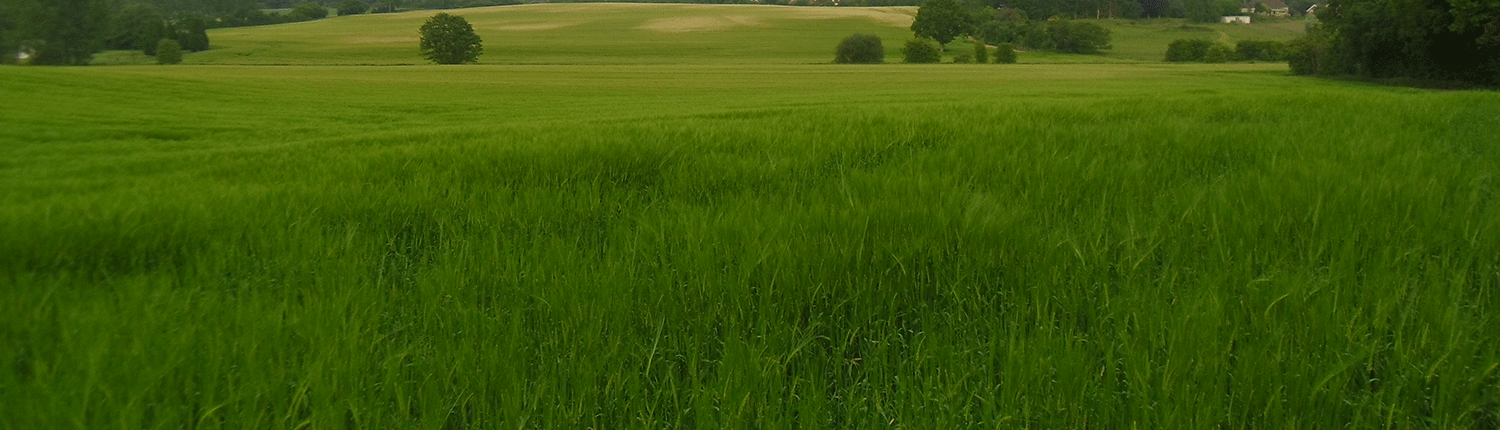 A lovely green meadow in Charing Kent, a beautiful field.