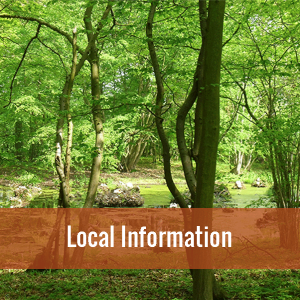 Photo of a woodland scene taken at Charing, click image to find out more local information